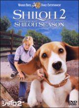 ビーグル犬シャイロ