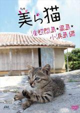 美(ちゅ)ら猫