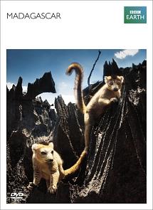 マダガスカル BBC