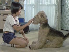 昭和の名作ライブラリー 第20集 ふしぎ犬トントン HD
